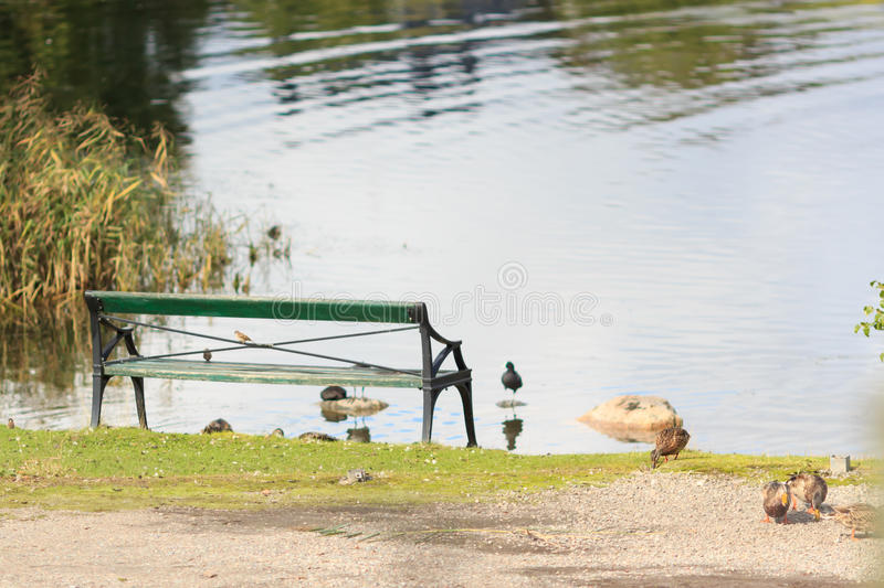 Wooden bench in front of the lake stock image