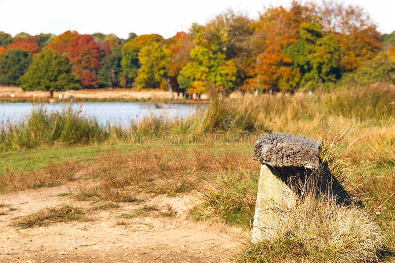 Wooden Bench in Richmond Park, London stock photo