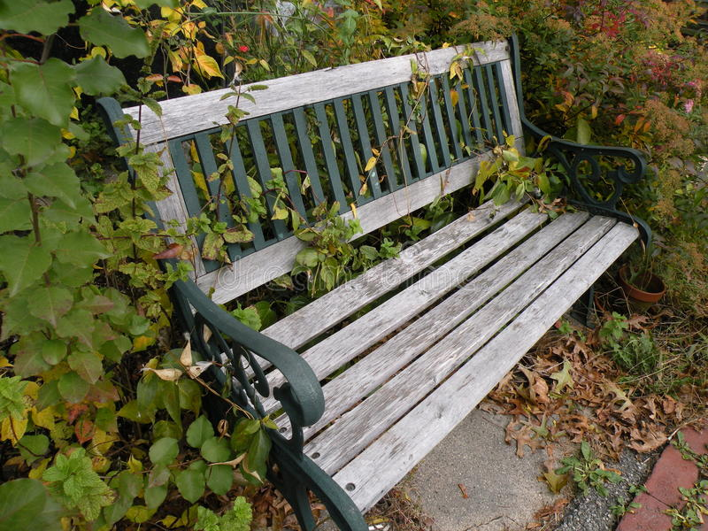 Wooden Bench In The Vines Royalty Free Stock Photos