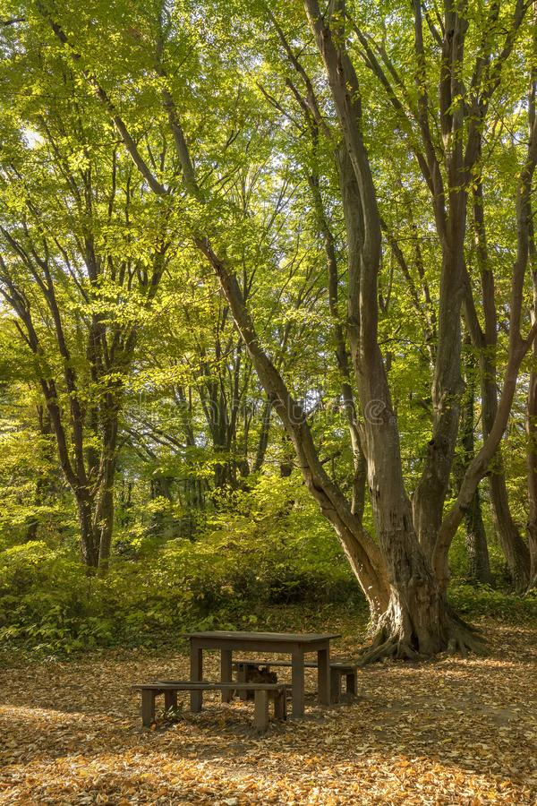 Wooden benches and table for rest royalty free stock photos