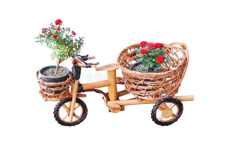 Wooden bicycle with decoration red rose flower tree blooming in black pot on weave rattan basket isolated on white background. Close up Wooden bicycle with stock photography