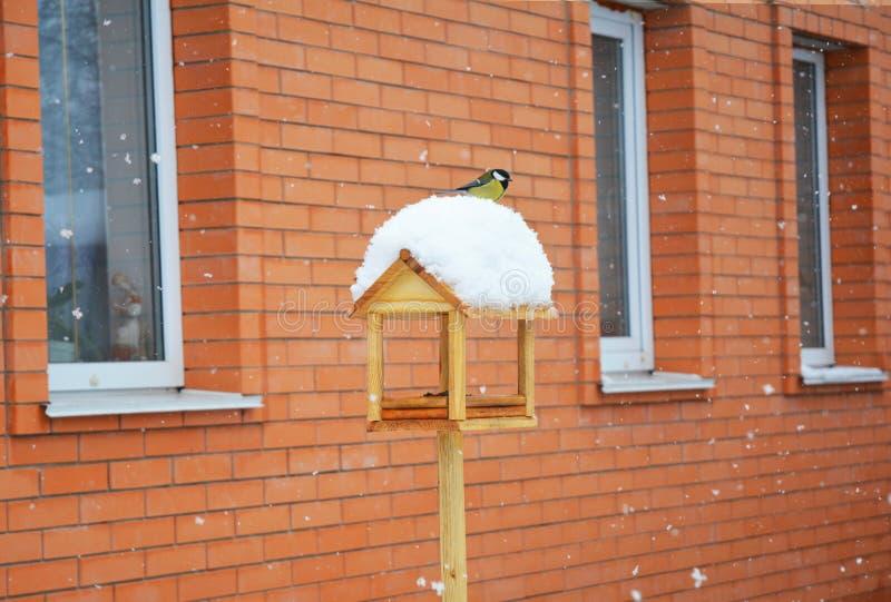 Wooden Bird Feeder with great tit Parus major. Feeding birds in your garden stock photo