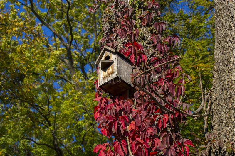 Wooden bird feeder on a tree with bright red leaves. In detail royalty free stock photos