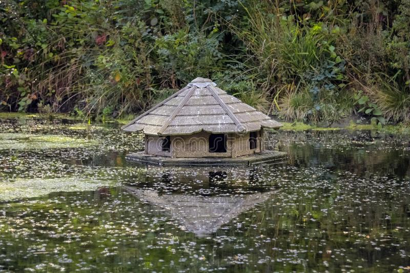 Wooden bird house with reflection floating on the water in the p. Ond surrounded by plants and bulrushes stock image