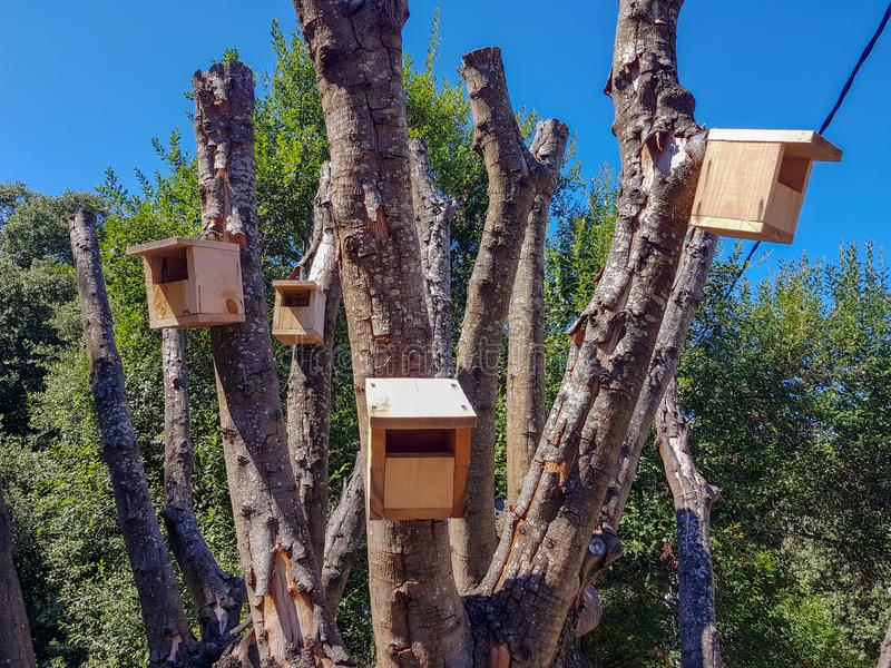 Wooden bird houses located in a newly pruned tree. Nest, home, natural, nature, animal, background, roof, hole, box, construction, bird-box, season, nobody stock photos