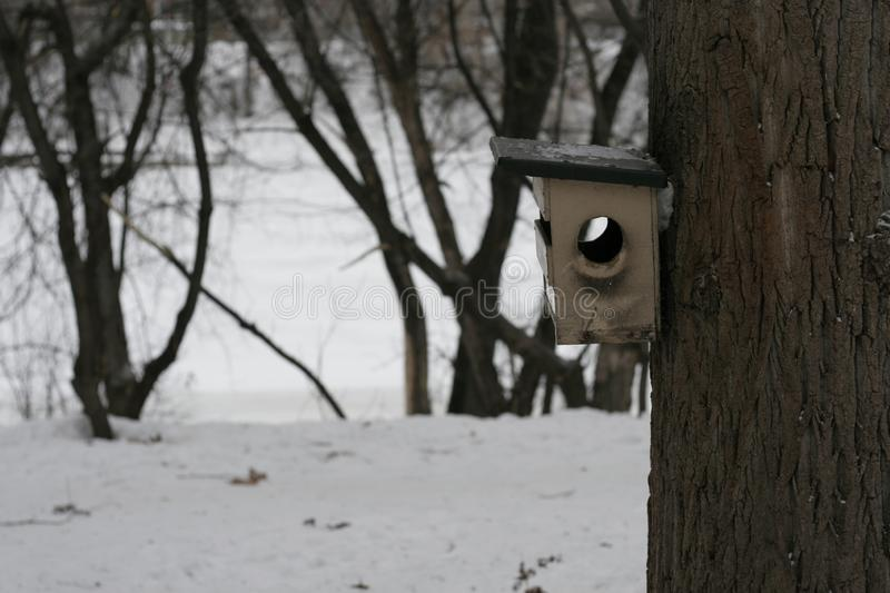 Wooden birdhouse hanging on a tree trunk in a winter park. stock images
