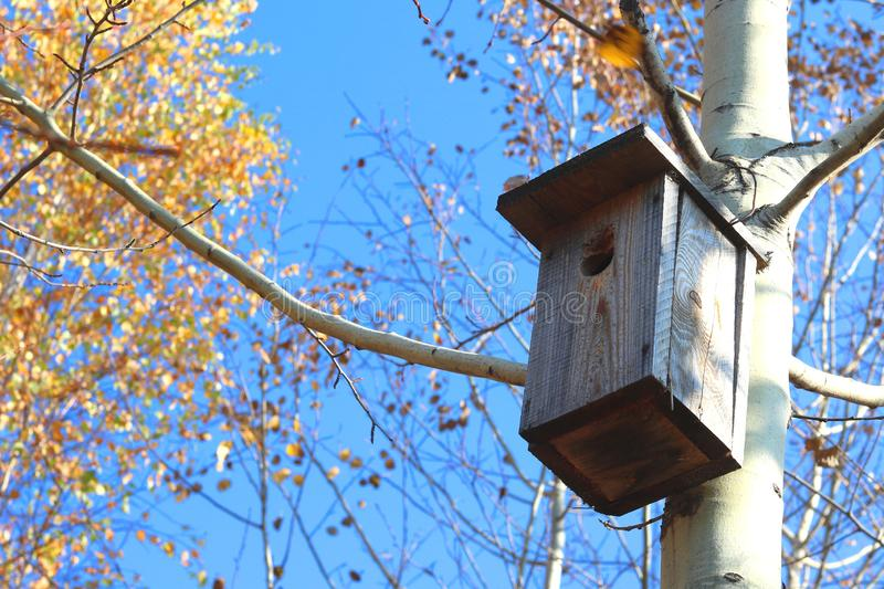 Wooden birdhouse on tree in forest against blue sky. In autumn royalty free stock photos