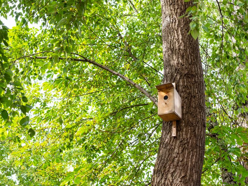 wooden birdhouse on trunk of old poplar tree stock photography