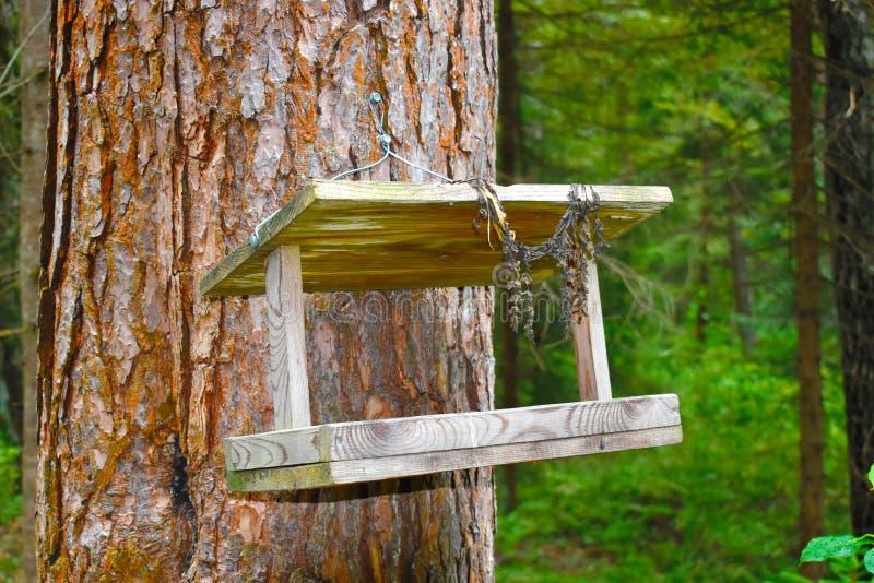 Wooden birds feeder. stock images