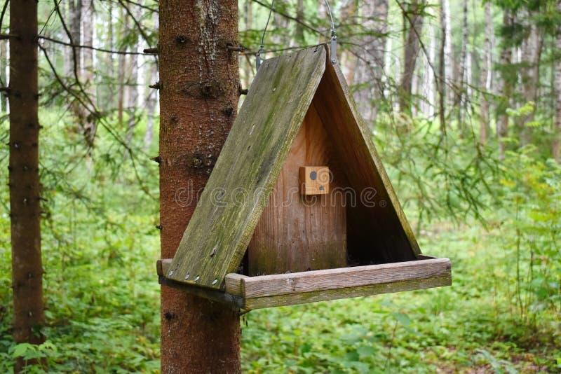 Wooden birds feeder. royalty free stock photos