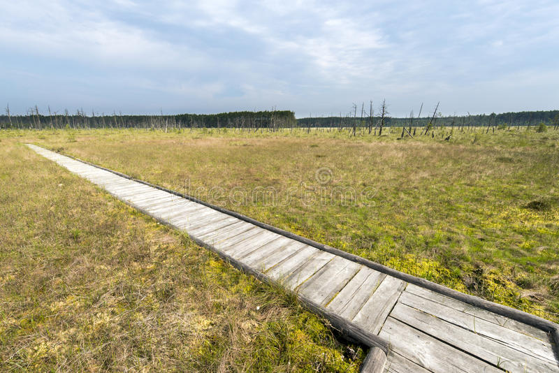 Wooden board walk over the Obary peat bog in Poland stock photo