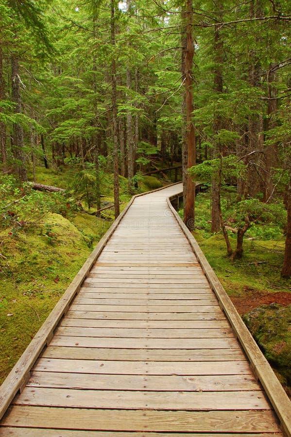 Free Wooden Boardwalk Stock Photo - 16223540