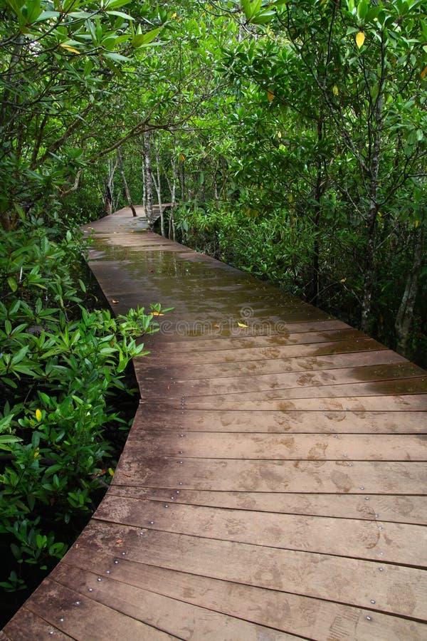 Wooden boardwalk stock image