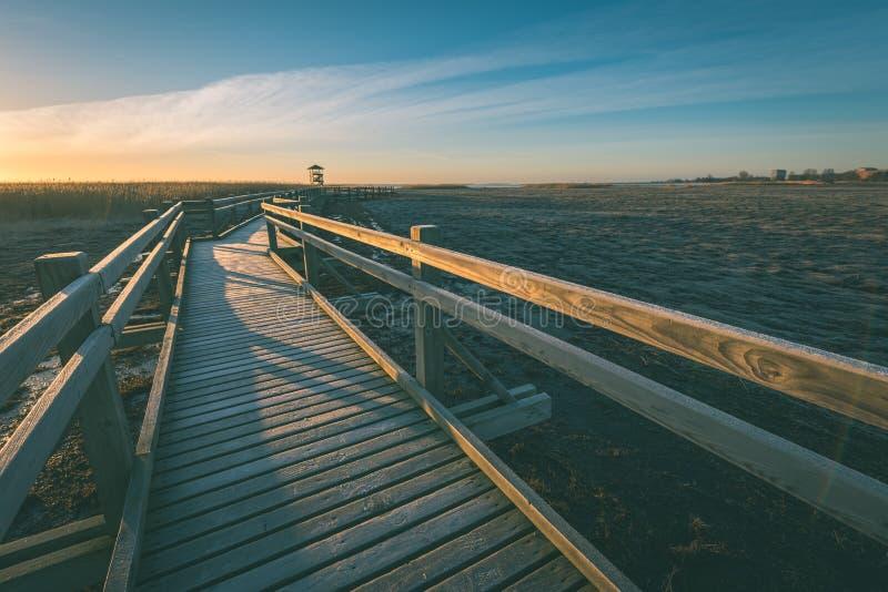 Wooden boardwalk with bird watch tower in early morning - vintage green look. Wooden boardwalk with bird watch tower in early morning with colorful sunrise in stock photo