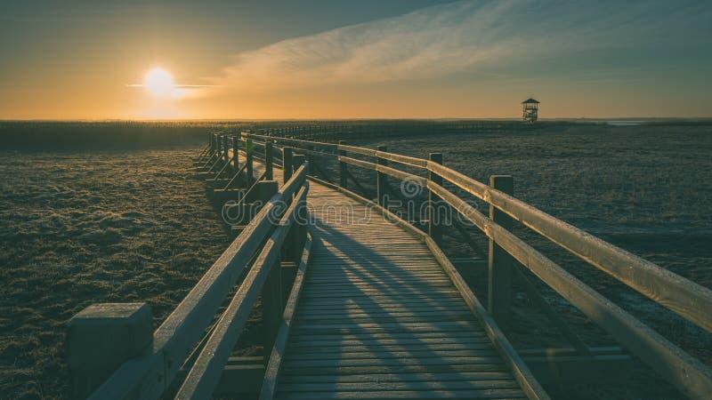 Wooden boardwalk with bird watch tower in early morning - vintage green look. Wooden boardwalk with bird watch tower in early morning with colorful sunrise in stock photography