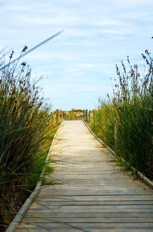 Wooden boardwalk in the dunes leading to the sandy beach, the pa. Th by the sea, plants on the dunes, tourism royalty free stock photo