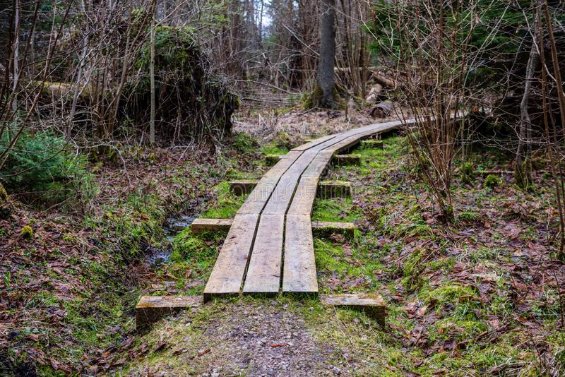 wooden boardwalk in forest swamp area royalty free stock image