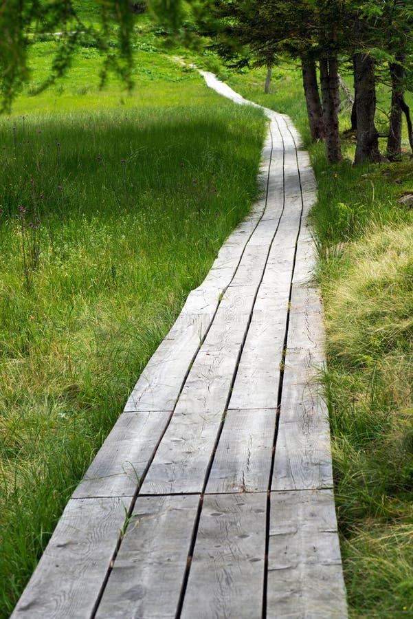 Wooden boardwalk through green countryside stock photography