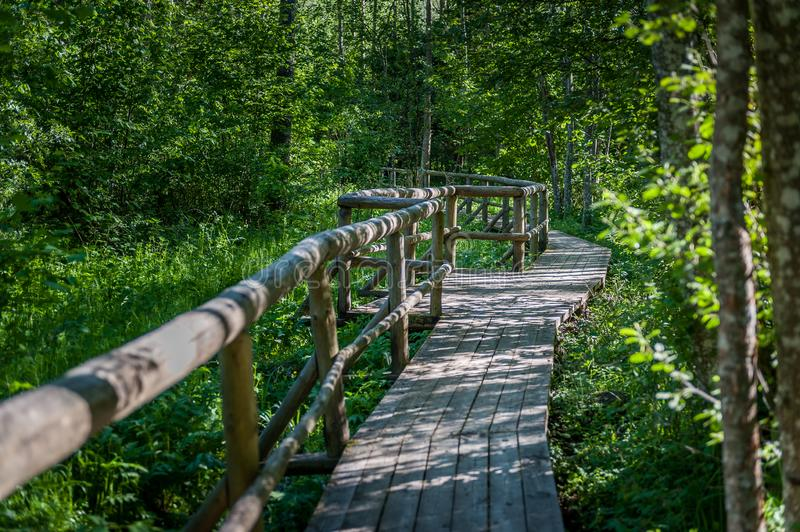 Wooden boardwalk at hiking trail crossing a mysterious Pokaini Forest in Latvia. Baltic.  Landscape stock photos