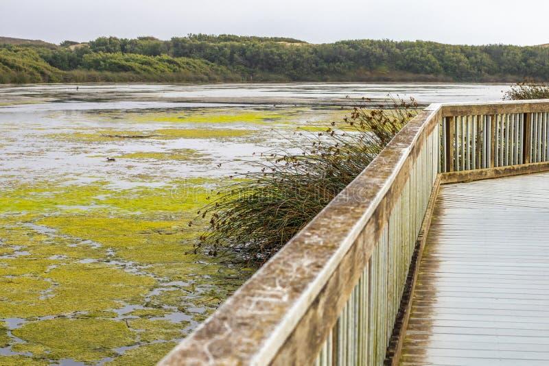 Wooden Boardwalk Through the Lake. Oso Flaco Lake Natural Area. Trip Through Several Diverse Natural Habitats stock photos
