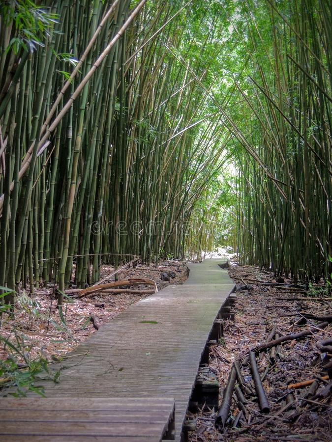 Wooden boardwalk path through dense bamboo forest, leading to famous Waimoku Falls. Popular Pipiwai trail in Haleakala National Pa royalty free stock photos