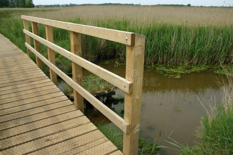 Wooden boardwalk through reedbed with bridge royalty free stock photo