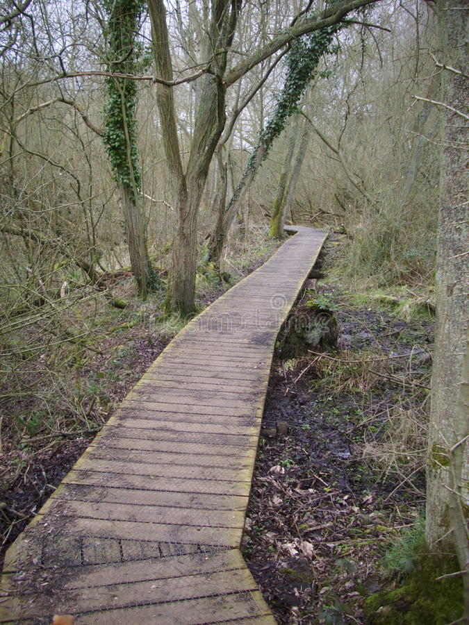 Boardwalk in woodland. Raised wooden boardwalk running through woodland with trees and leaf litter. Disappears into the distance between trees and turns stock image