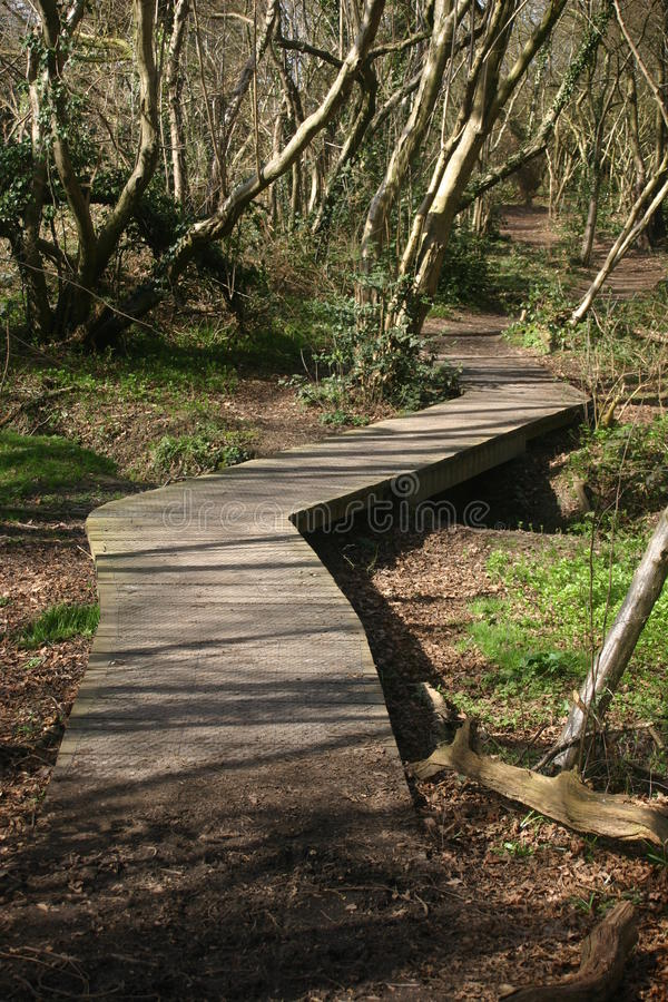 Wooden boardwalk in woodland. Raised wooden boardwalk covered in wire mesh over stream in woodland with trees stock images