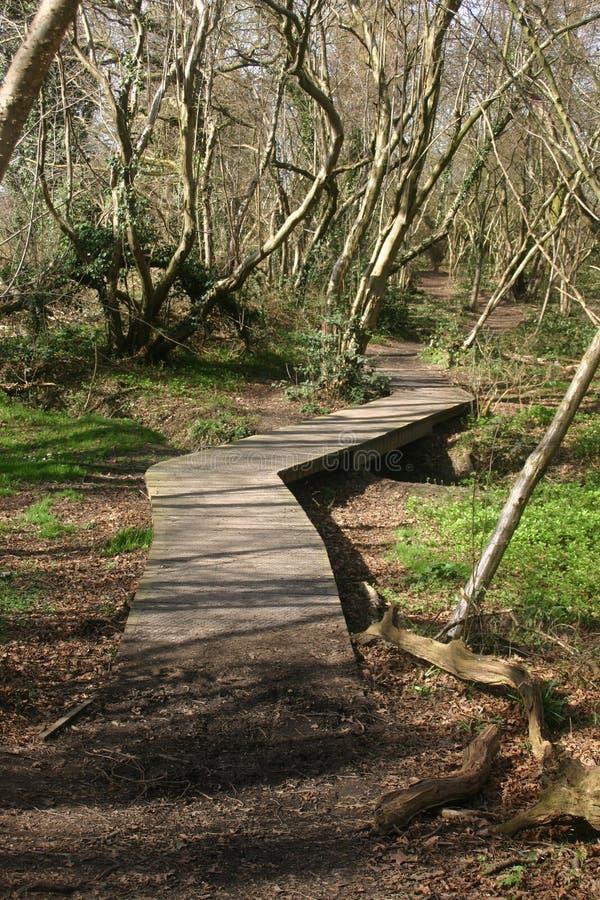 Wooden boardwalk in woodland stock photo