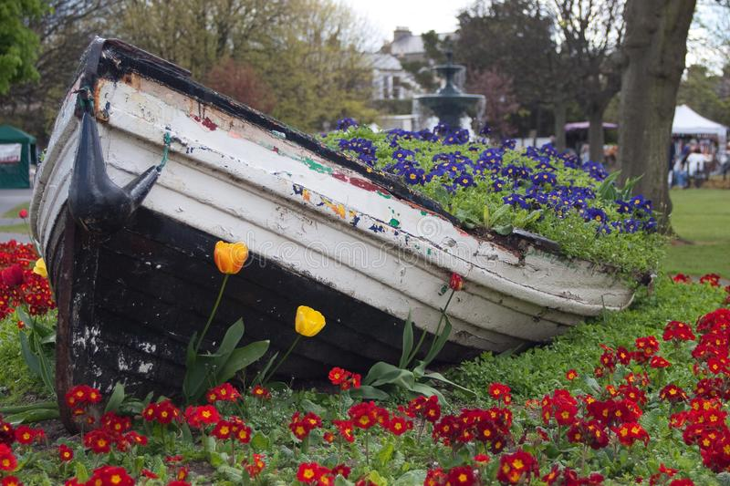 Wooden boat filled with pink and red flowers. Beautiful flower bed stock photos