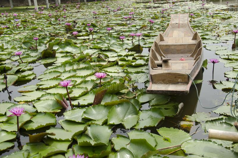 Wooden boat floating for travelers people rowing with Red lotus stock photography