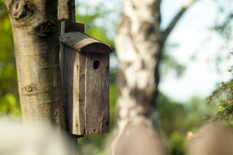 Wooden booth for birds on the tree. A bird house on the bruch. royalty free stock photo