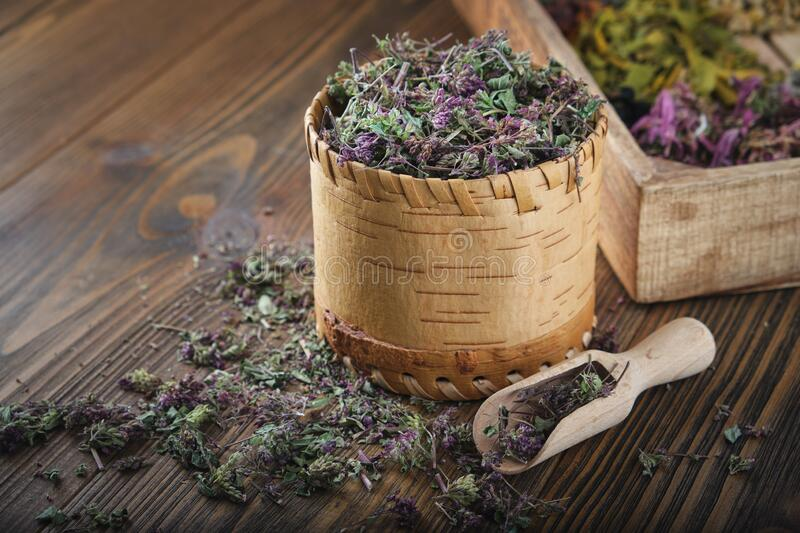 Wooden bowl of dry wild Marjoram or Origanum vulgare plants, wooden crate of medicinal herbs. Wooden bowl of dry wild Marjoram or Origanum vulgare plants royalty free stock image