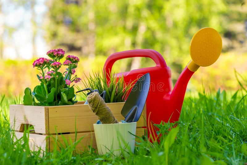In a wooden box flowers for planting in the open ground garden and gardener`s tools stock images