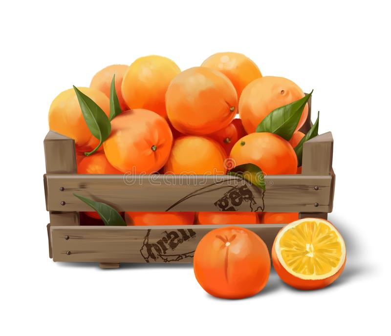 Wooden box with oranges. Watercolor drawing stock illustration
