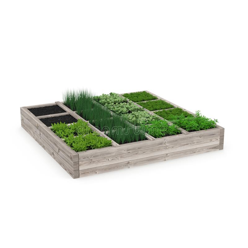 Wooden box with a young garden on white. 3D illustration stock illustration
