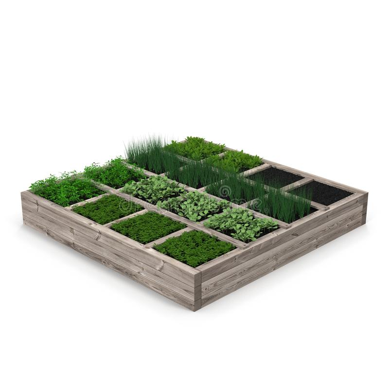 Wooden box with a young garden on white. 3D illustration royalty free illustration