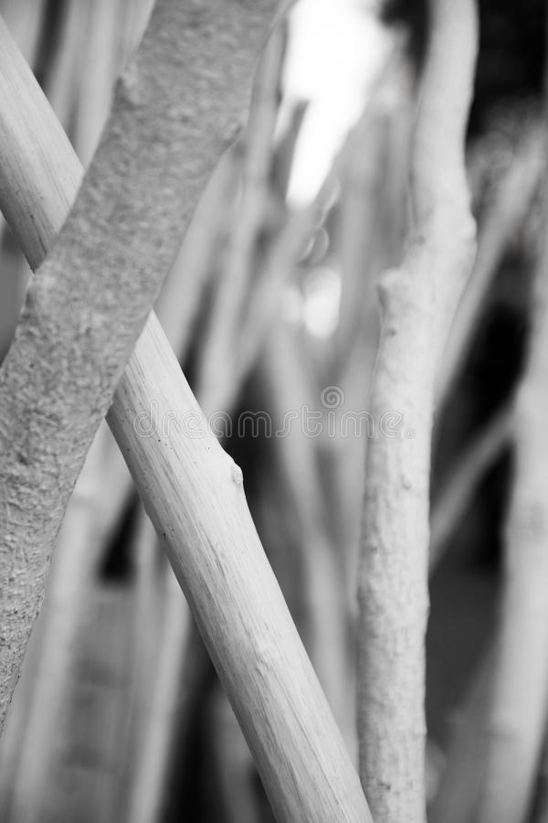 Wooden branches royalty free stock photo
