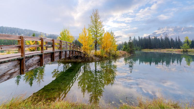 Wooden bridge across cascade pond with yellow pine trees in Banff National park. Alberta, Canada royalty free stock photography