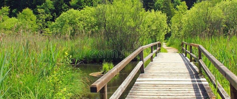 Wooden bridge in the bogland. Wooden bridge in the swamp, at springtime stock image