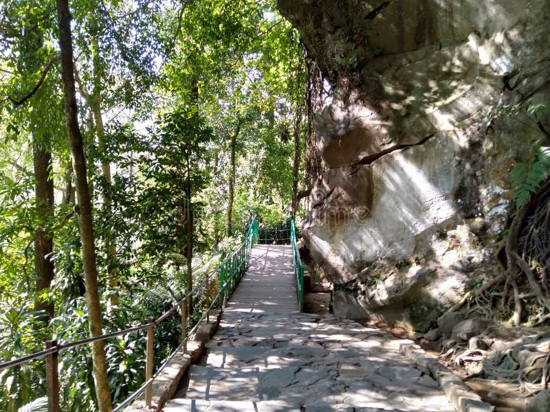 wooden bridge between cliffs and trees stock image