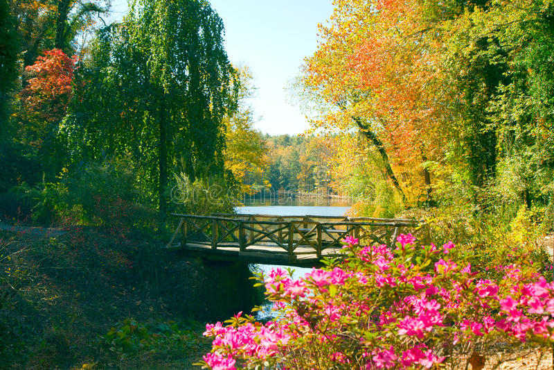 Wooden bridge in fall stock photo