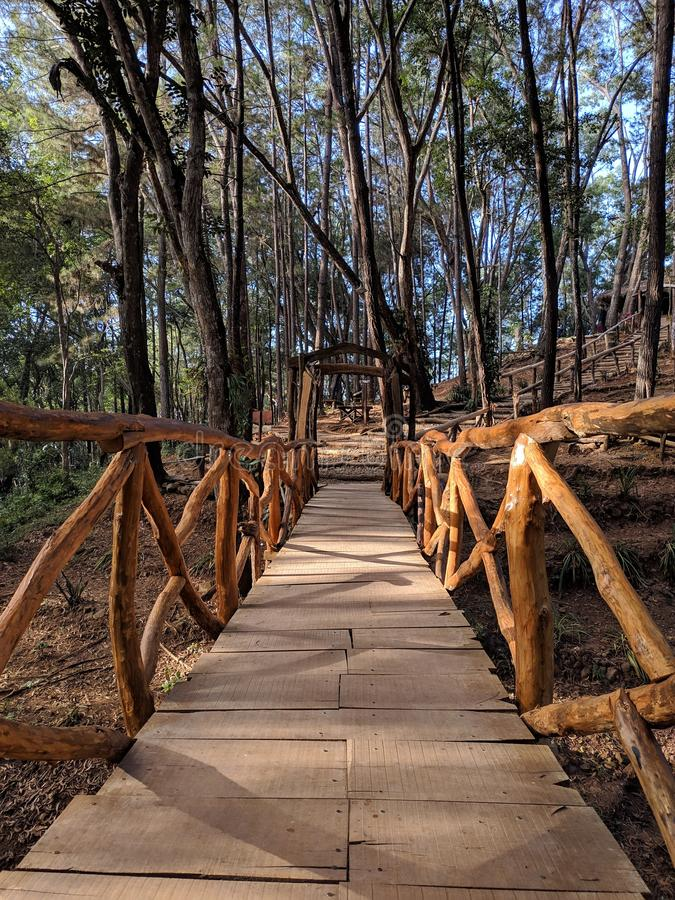 Wooden bridge in the forest.  royalty free stock photography