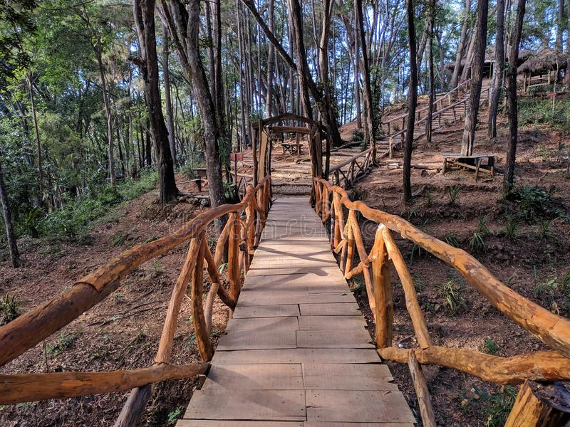 Wooden bridge in the forest.  royalty free stock images
