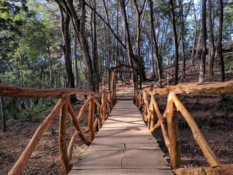 Wooden bridge in the forest.  stock photos
