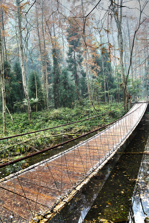 Download Wooden Bridge In The Forest Stock Photo - Image: 38559936