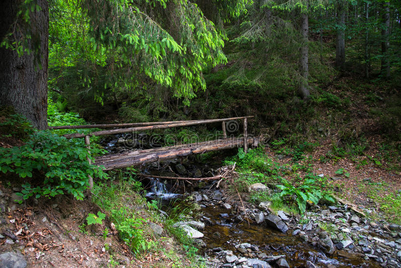 Wooden bridge in the green forest. Wooden bridge leading into the green forest stock image