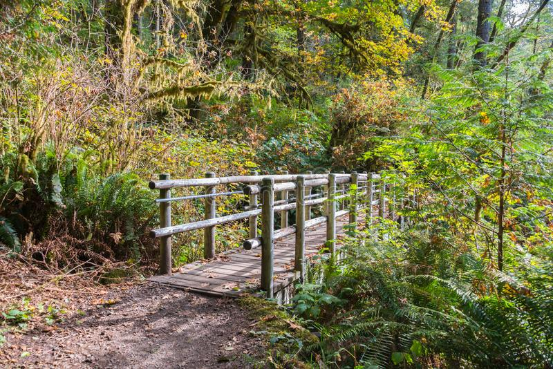 Wooden Bridge on Hiking Trail in Temperate Rain Forest in Early royalty free stock photos