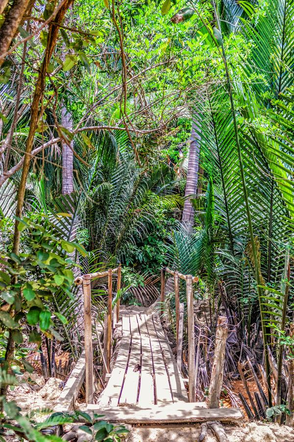 Wooden bridge in the jungle - Palawan Island, Philippines stock images