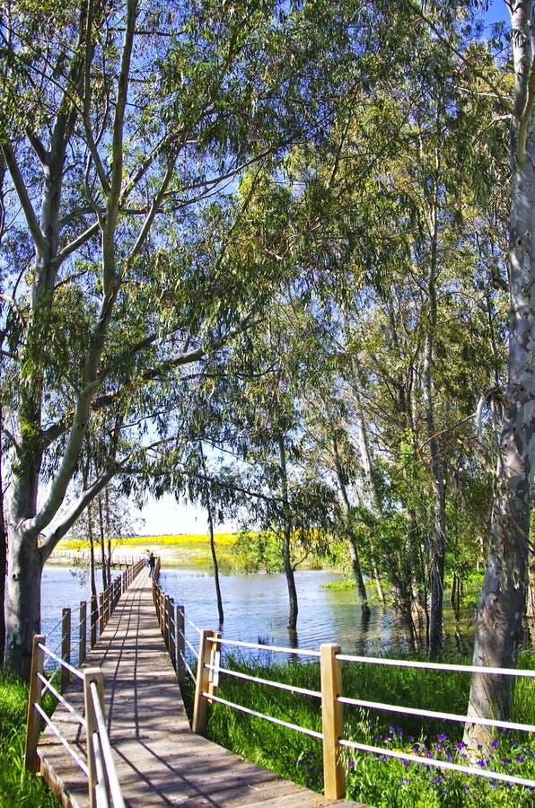 Wooden bridge into the lake of Alqueva , Portugal. Wooden bridge into the lake of Alqueva in Alentejo, Portugal royalty free stock image
